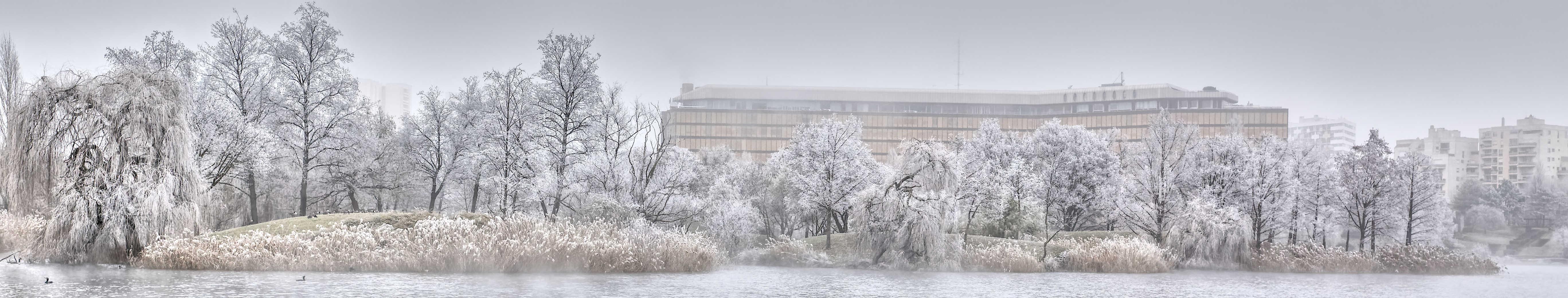 Le lac de Créteil - - Ambiance givrée