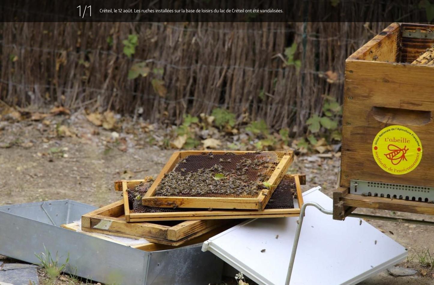 Créteil, le 12 août. Les ruches installées sur la base de loisirs du lac de Créteil ont été vandalisées.